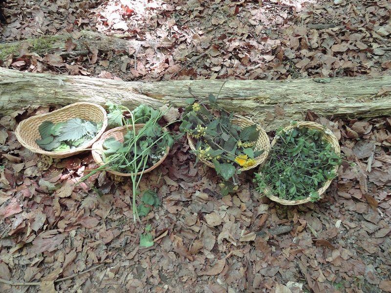 Umweltbildung_Baden_Wurzelsepp_und_Kräuter