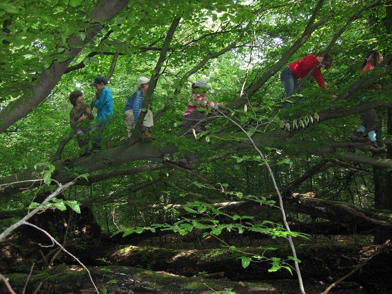 Kletteraffen, Umweltbildung Baden